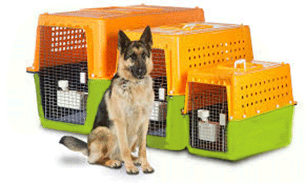 Dogs pet relocation services kenya